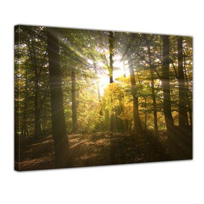 Leinwandbild - Waldlichtung