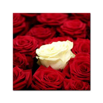 Leinwandbild - Weiße Rose – Bild 2
