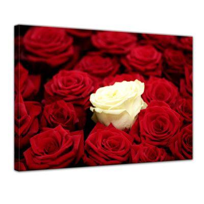 Leinwandbild - Weiße Rose – Bild 1