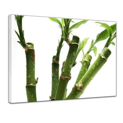 Leinwandbild - Bambus – Bild 1