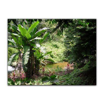 Leinwandbild - Bananenbaum im Dschungel – Bild 9
