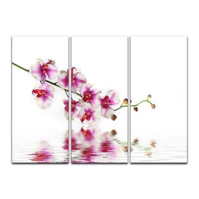 Leinwandbild - Orchideenzweig – Bild 13