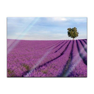 Glasbild - Lavendelfeld in der Provence - Frankreich II – Bild 3