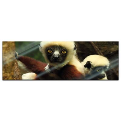 Glasbild - Big Eyes - Indri Lemur – Bild 4