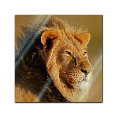 Glasbild - Afrikanischer Löwe  – Bild 1