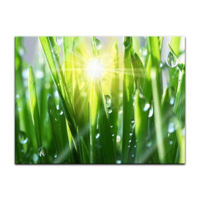 Glasbild - Gras II  – Bild 2