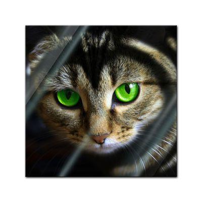 Glasbild - Katze mit grünen Augen – Bild 1
