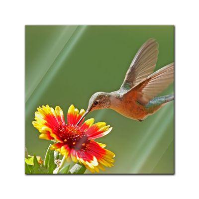 Glasbild - Kolibri – Bild 1