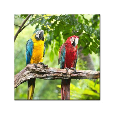 Glasbild - Macaw Papageien – Bild 1