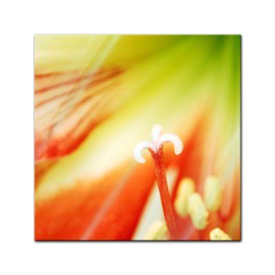 Glasbild - Blume - Nahaufnahme – Bild 1