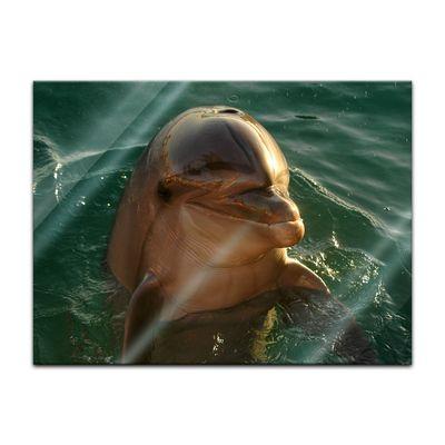 Glasbild - Delphin – Bild 2