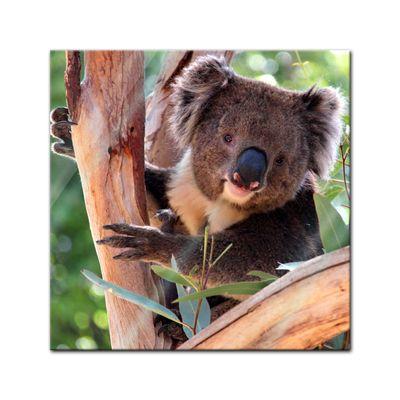 Glasbild - Koalabär – Bild 1