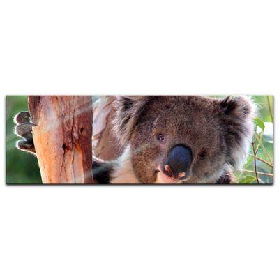Glasbild - Koalabär – Bild 6