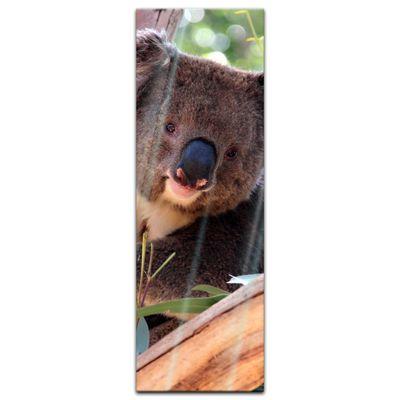 Glasbild - Koalabär – Bild 7