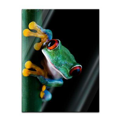 Glasbild - Laubfrosch – Bild 5