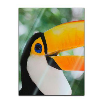 Glasbild - Toucan – Bild 3
