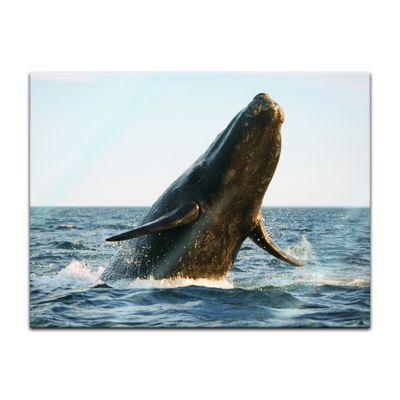 Glasbild - Wal – Bild 4