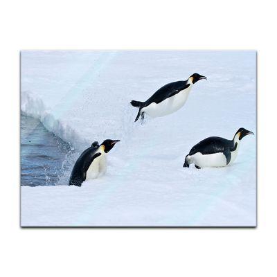 Glasbild - Pinguin II – Bild 2