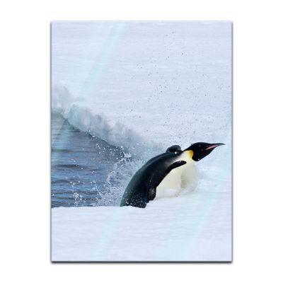 Glasbild - Pinguin II – Bild 3