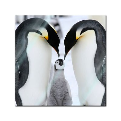 Glasbild - Pinguinfamilie – Bild 1