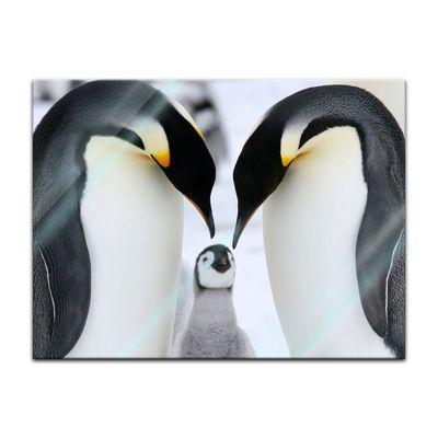 Glasbild - Pinguinfamilie – Bild 4