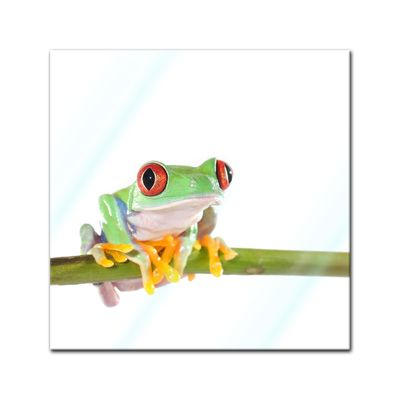 Glasbild - Rotaugenlaubfrosch – Bild 1