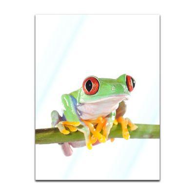 Glasbild - Rotaugenlaubfrosch – Bild 5