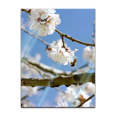 Glasbild - Frühling – Bild 3