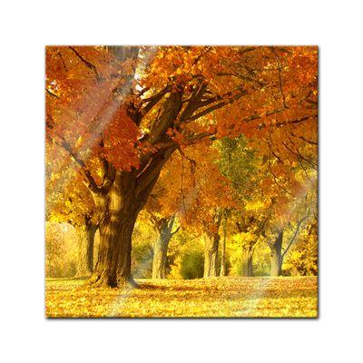 Glasbild - Herbst Szene – Bild 1