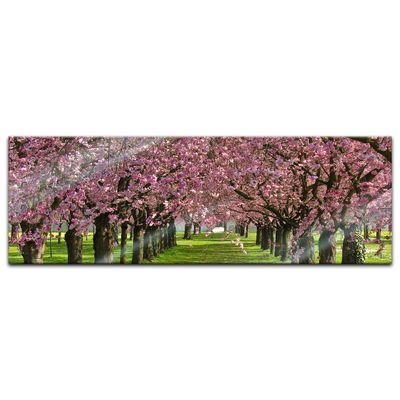 Glasbild - Kirschblüten – Bild 6
