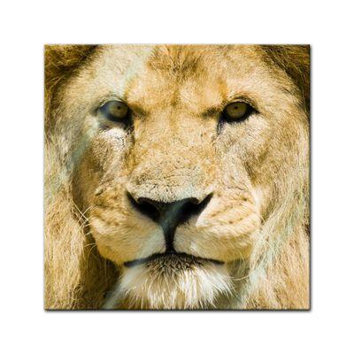 Glasbild - Löwe – Bild 1