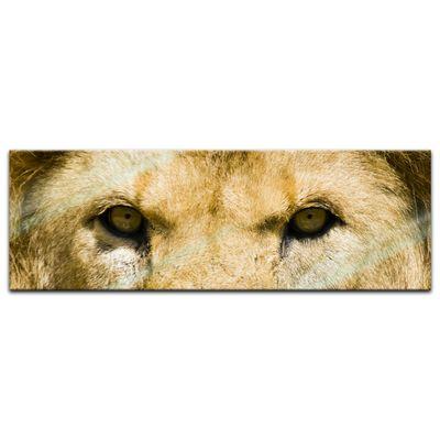 Glasbild - Löwe – Bild 6