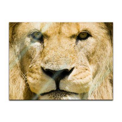 Glasbild - Löwe – Bild 4