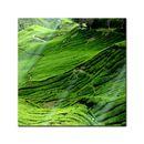Glasbild - Teeplantage in Malaysia