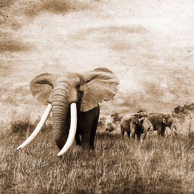 Fototapete - Elefanten Grunge – Bild 4