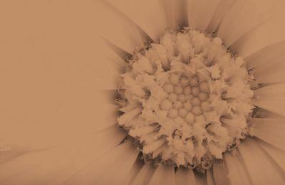 Fototapete - Gelbe Blume – Bild 6
