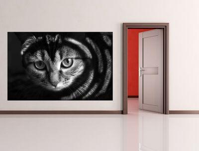 Fototapete - Katze mit grünen Augen – Bild 5