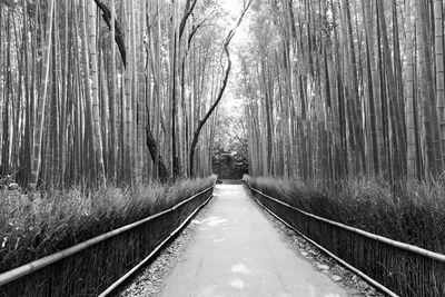 Fototapete - Bambuswald in Arashiyama, Kyoto Japan – Bild 4