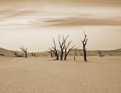 Fototapete - Dead Valley - Namibia – Bild 4