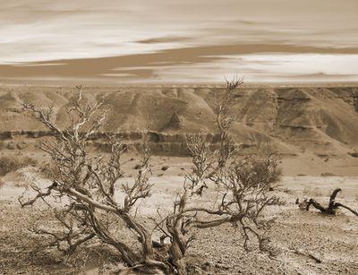 Fototapete - Wüste Gobi – Bild 4