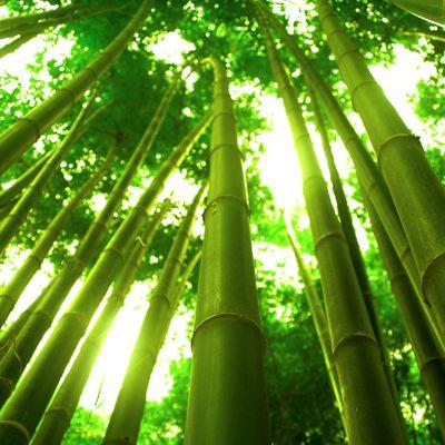 Fototapete - Bambus in Thailand – Bild 2