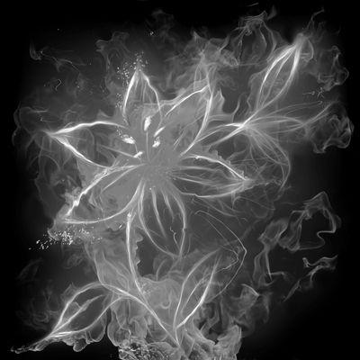 Fototapete - Feuerlilie – Bild 4