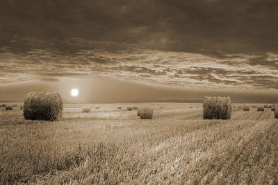 Fototapete - Kornfeld Stroh – Bild 4