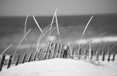 Fototapete - Sanddüne – Bild 6