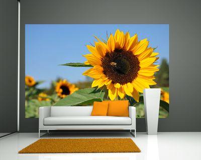 Fototapete - Sonnenblume mit Biene – Bild 1