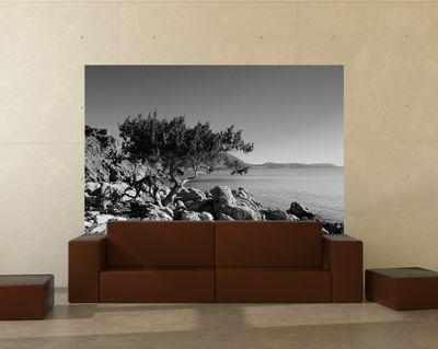 Fototapete - Mediteraner Baum - Rhodos Griechenland – Bild 5