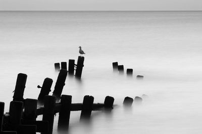 Fototapete - Moonlit Sea, Norfolk – Bild 6