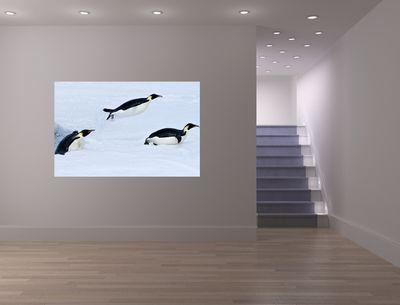 Fototapete - Pinguin II – Bild 1