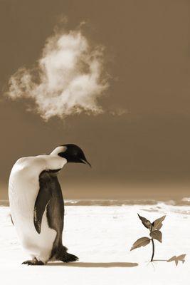 Fototapete - Pinguin mit Blume – Bild 4