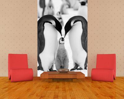 Fototapete - Pinguinfamilie – Bild 5